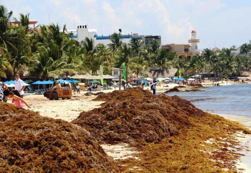 00de6351 El objetivo es evitar que el sargazo llegue a la costa y reducir el impacto  ecológico