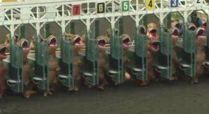 PETA sugiere a Pamplona sustituir encierros de toros por botargas de T-Rex