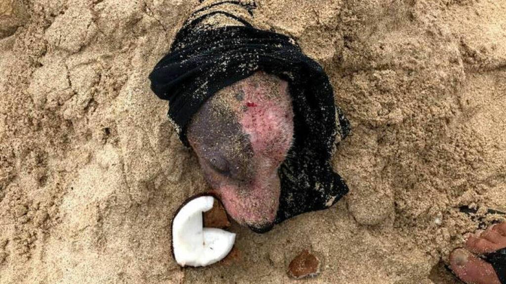 Hombre encuentra a una perrita enterrada en la arena y con la piel quemada