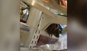 Cierran tienda en Tokio tras viralizarse un video de ratas corriendo en el local