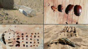 La imagen de una botella en el desierto nos demuestra el daño que está causando el hombre al ambiente