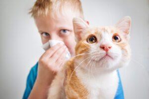Desarrollan una vacuna para controlar la alergia a los gatos