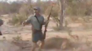 Cazadores se felicitan entre ellos tras matar a quemarropa a un león