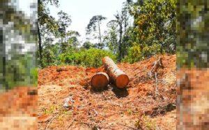 Hombres acusados de ecocido deberán reforestar con 3 mil árboles en Chiapas