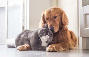 Un año humano no equivale a siete años en un perro o gato