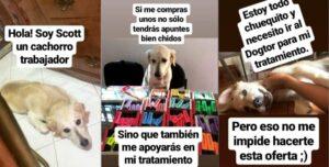 Perrito vende marcadores para poder pagar su tratamiento médico