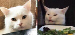 """Nunca pensé que mi gato sería famoso, dice la dueña de """"Smudge"""""""