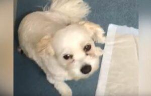 Un perro casi muere después de comer una galleta con cannabis