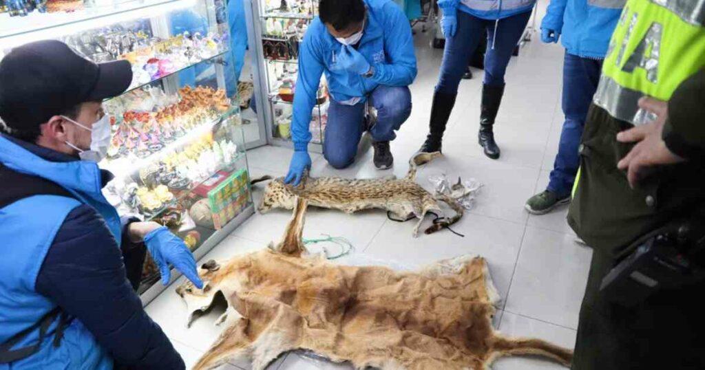 Encuentran más de mil restos de animales utilizados para brujería en mercado de Colombia