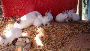 Más de 100 conejos mueren después de que activistas asaltaran una granja en España