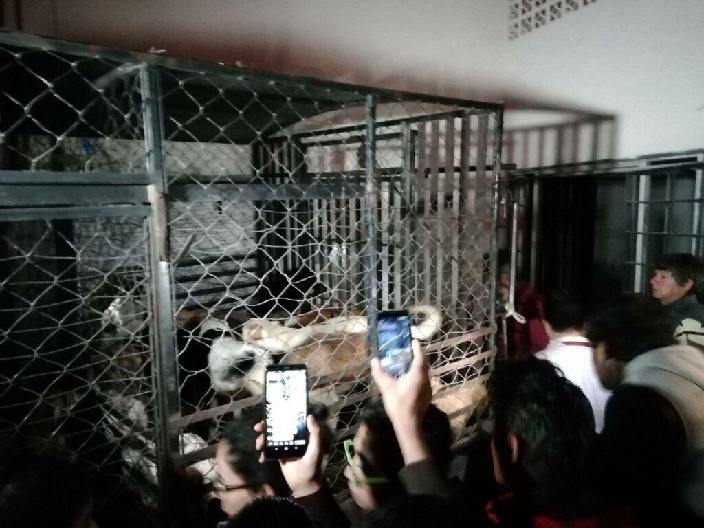 Mujer de Puebla tenía restos de perros muertos en su refrigerador y a más de 30 enjaulados en su casa