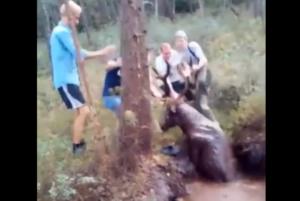 Cazadores rescatan a ciervo que estaba atrapado en el fango de un pantano