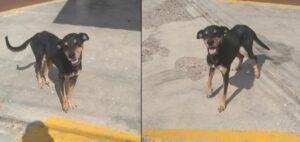 La emotiva reacción de un perro de la calle al recibir alimento