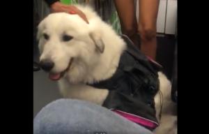 Pasajeros denuncian a Viva Aerobus por negarles viaje con su perro de apoyo emocional