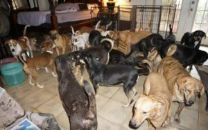Mujer en Bahamas refugia en su casa a 97 perros y los protege del huracán Dorian