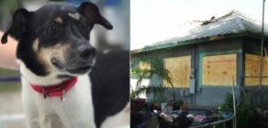 Un perro muere por salvar a su familia durante un incendio