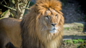 Hombre se niega a pagar a un electricista y le avienta un león para atacarlo