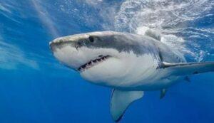 Una mujer es atacada por un tiburón y pierde las manos y un seno