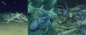 Graban a decenas de criaturas marinas devorando los restos de una ballena