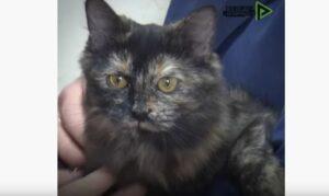 Detienen a una gata que transportaba droga a un penal