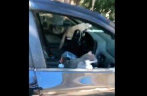Mujer deja abierta la ventanilla de su auto y lo invaden gatos
