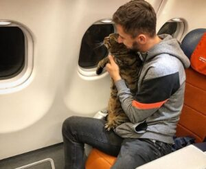 Aerolínea sanciona a pasajero por viajar con su gato gordo