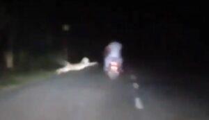Motociclista se salva de ser atacado por un leopardo