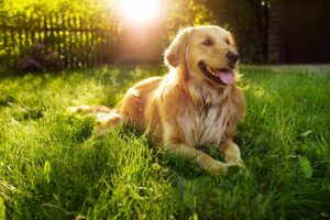 Científicos aseguran que un año canino no equivale a siete de humano