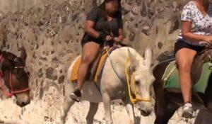 Exhiben maltrato que sufren burros para transportar turistas obesos en islas griegas