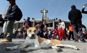 Mujeres que ayudan a perros durante festejos de la Virgen piden no abandonarlos