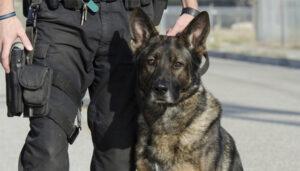 Realizan exhibición canina en una escuela y perros encuentran droga a alumnos