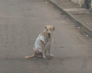 Se viraliza imagen de una perrita vestida con un huipil para protegerse del frío