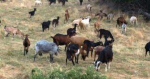 En Guerrero, sujetos asesinan a niño pastor por robarle sus chivos