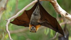 Estudios vinculan a la sopa de murciélago con el nuevo coronavirus en China