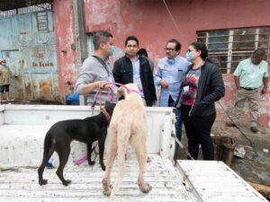"""Rescatan en mal estado a 35 de los 50 perros que tenía """"Don Chocolate"""" en Córdoba"""
