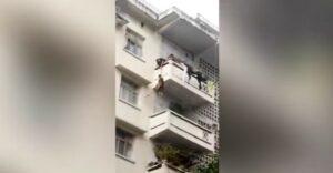 Abuelita cuelga a su nieto de un quinto piso para rescatar a su gato