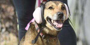 Spotify crea playlist especial para perros y gatos