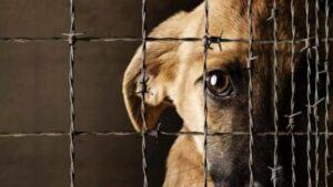Partido Verde propone hasta 18 años de cárcel por maltrato animal en la CDMX