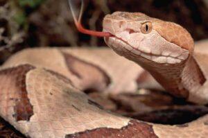 Un cazador sobrevive al ataque de una serpiente en EU
