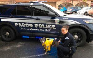 Un perro enfermo de cáncer es adoptado y se convierte en policía por un día