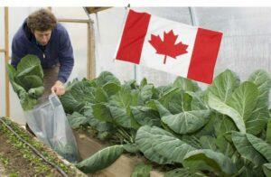 Canadá busca horticultor mexicano y ofrece 62 mil 700 pesos al mes