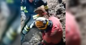 Rescatan a dos perros que quedaron atrapados en una cantera por 30 horas