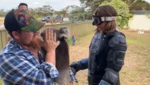"""Juegan broma a reportera y le hacen creer que cargará a un koala """"venenoso"""""""