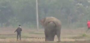 Turistas en la India son atacados por un elefante al intentar tomarse una foto con él