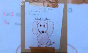 Niño pierde a su perrita y la busca con un dibujo porque no tiene fotos de ella
