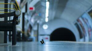 La pelea de dos ratones por comida gana el premio de fotografía de Vida Salvaje del Año