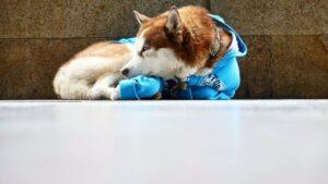 En Rusia, un perrito espera a diario y por 8 horas a que su dueña termine de trabajar