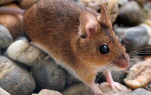 Zoológico de EU dejará que le pongas el nombre de tu ex a un ratón que será devorado