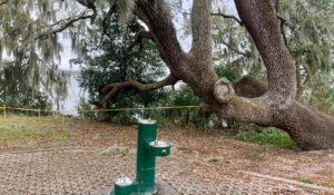 Cierran parte de un parque en Florida por apareamiento masivo de serpientes