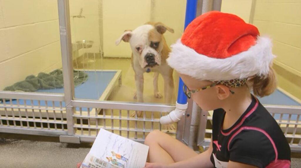 Niños leen cuentos a perros que fueron abandonados en un refugio